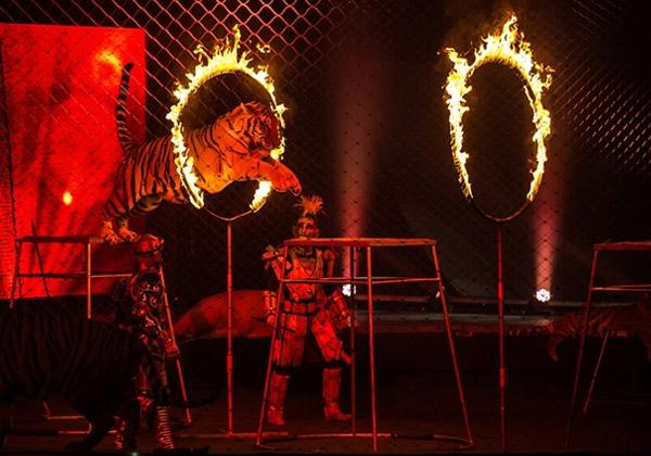 Цирк запашных купить билеты 2016 пролетая над гнездом кукушки спектакль купить билет
